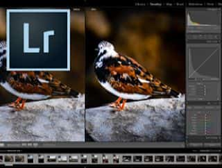 Lightroom Courses for Photographers